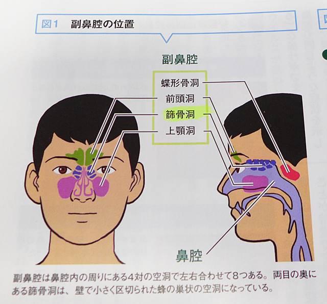 副鼻腔の位置